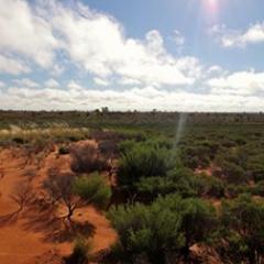 Desert myrtle shrubland in Australia's Gibson Desert